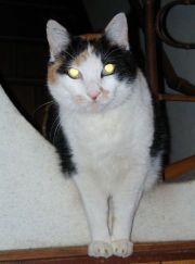 Cat100_2