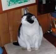 Cat201_3